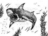 Cardabiodon