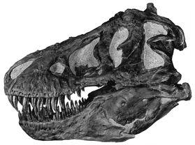 Tyrannoskull