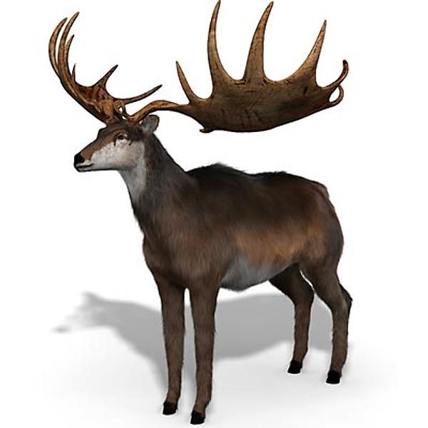 irish-elk-compared-to-moose