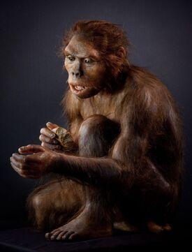 Homo habilis model