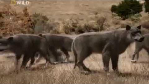 Cazadores prehistóricos (El lobo gigante)