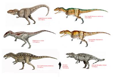Carcharodontosauridae