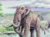 Mammuthus subplanifrons
