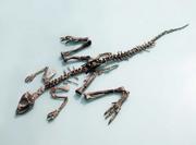 Jeholosaurus skeleton