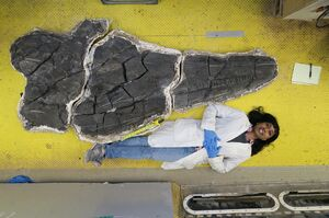 New and magnificent ichthyosaur skull from the Middle Triassic Augusta Mountains of Nevada NHMLA