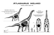 Atlasaurus skelet