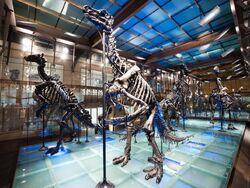 Iguanodon skeleton 02