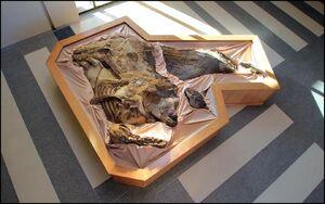 Dakota-dino mummy- North Dakota Heritage Center