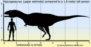 Majungasaurus-size