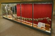Euhelopus fossil 02