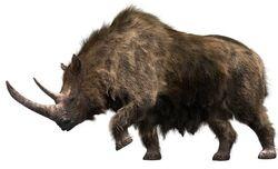 Шерстистый носорог 7