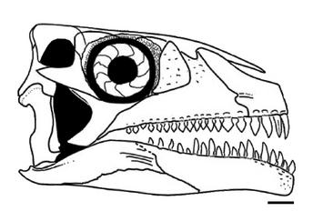 Azendohsaurus madagaskarensis skull diagram