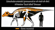 Eotrachodon skeleton
