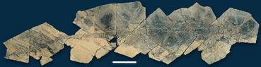 Guanlingsaurus liangae (YGMIR SPCV03108)