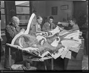 Otto Falkenbach (at left) and his team casting a skull of Styracosaurus in December 1936 (AMNH)