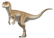 Аллозаврик-подросток