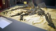 Hesperosaurus fossil 02