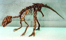 Probactrosaurus skeleton