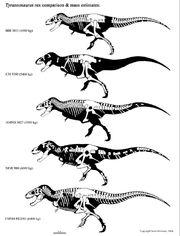 Tyrannosaurus mass
