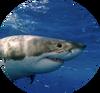 Рыбы лого