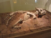 Auroraceratops fossil
