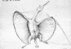 Hermann pterodactylus restoration 1800