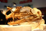 Proceratosaurus skull 02