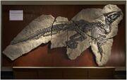 Tethyshadros skeleton