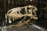 Tyrannosaurus Trystan 01