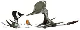 1Witton et al. 2015 wukongopterids compared