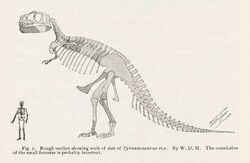 Skeletal restoration by William D. Matthew from 1905, the first reconstruction tyrannosaurus ever published
