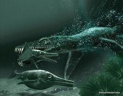 Морская фаунаюры