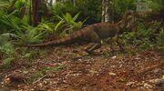 When Dinosaurs Roamed America Anchisaurus