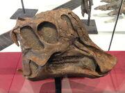 Procheneosaurus