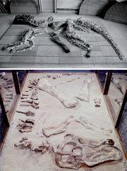 MSNM V345 Museo di Storia Naturale di Milano