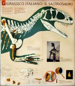 Сальтриозавр 2