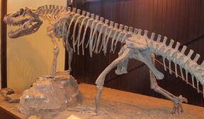 1024px-Saurosuchus galilei Ischigualasto (1)