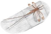 Megasecoptera fig1 703 (1)