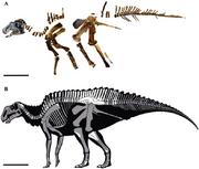 The skeleton of MSNM-V345