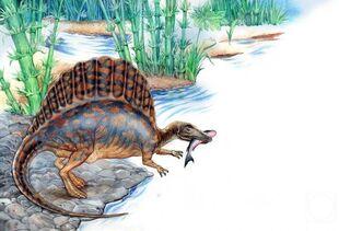 Спинозавр10