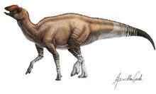 Aquilarhinus