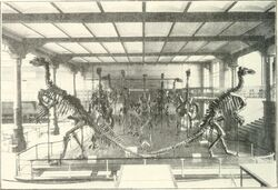 Iguanodon bernissartensis Bruxelles (1910)
