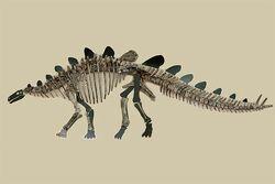 Стегозавр из России.