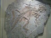 Psittacosaurus sinensis 02