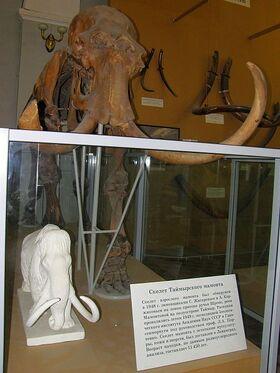 Таймырский мамонт