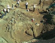 Camarasaurus fossil 02