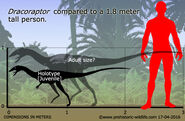 Dracoraptor-size