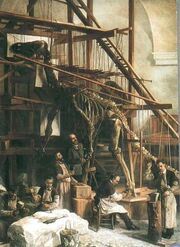 Louis François De Pauw, head preparer at the Royal Belgian Institute of Natural Sciences, supervising the first reconstruction of an Iguanodon in the St. George Chapel in Brussels, 1882.