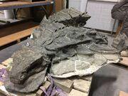 Nodosaur fossil 01 (1)