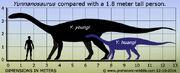 Yunnanosaurus-size
